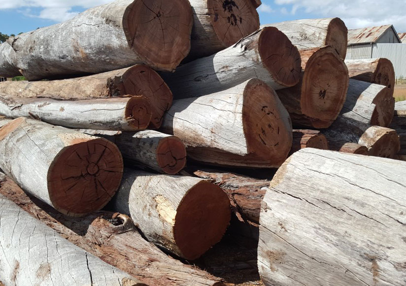 Lovely dry, clean firewood waiting to be cut.