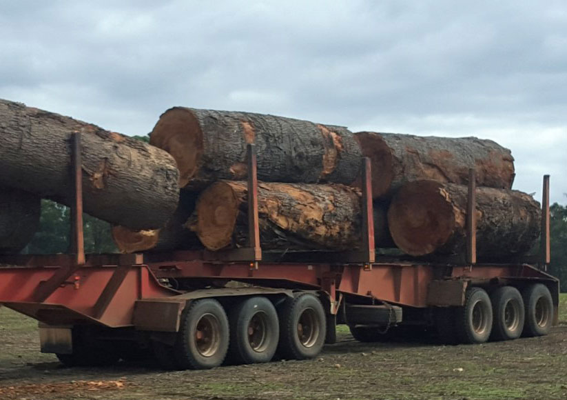 Beautiful big Red Gum logs heading to the mill