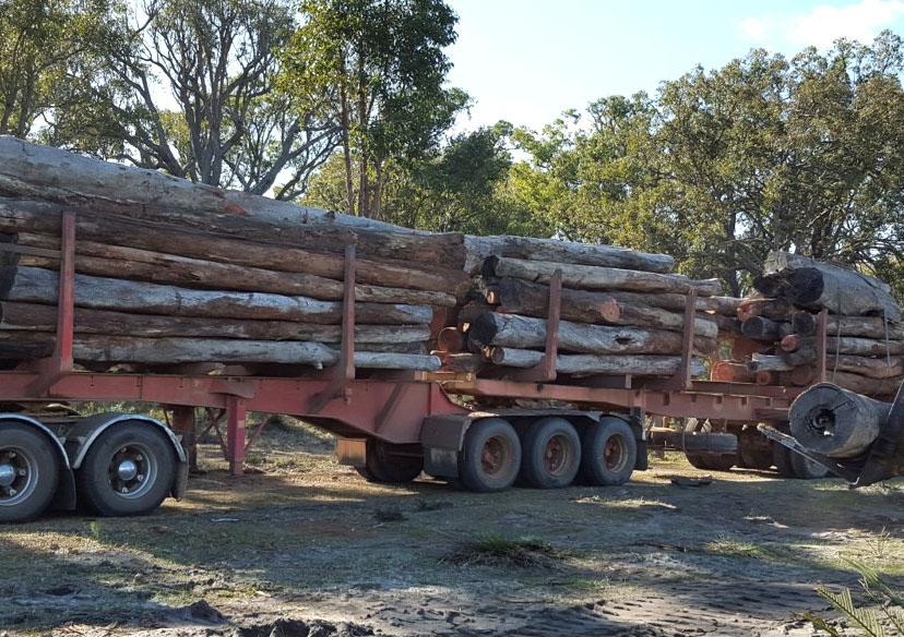 Lovely dry firewood heading for the yard