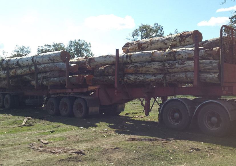 Nice load of Wandoo. This wood is very hard and long-lasting.