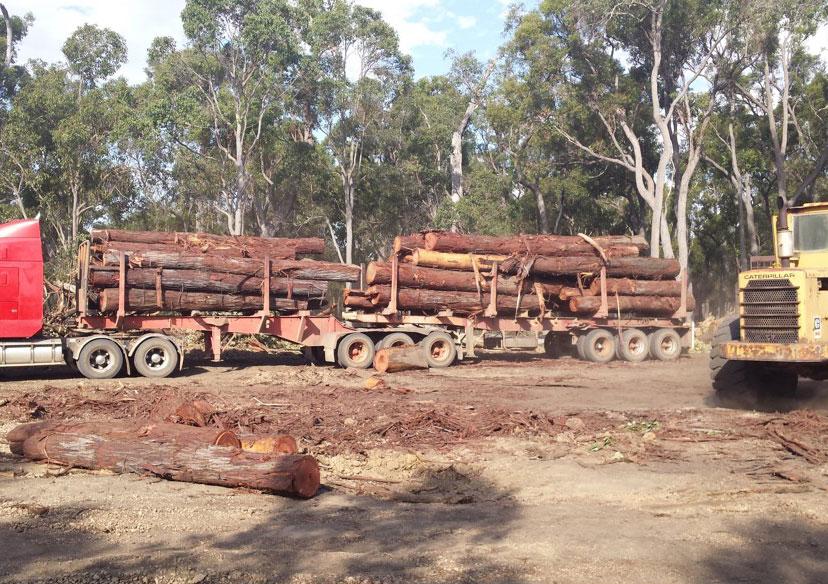 Load of Jarrah saw logs from a fenceline