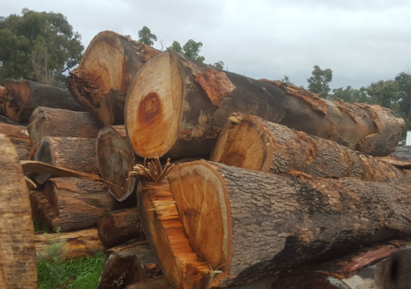 Lovely redgum logs waiting to be cut